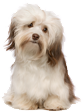 Acil Veteriner  - groomax grooming2 - Ana Sayfa