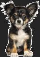 Acil Veteriner  - groomax grooming3 - Ana Sayfa