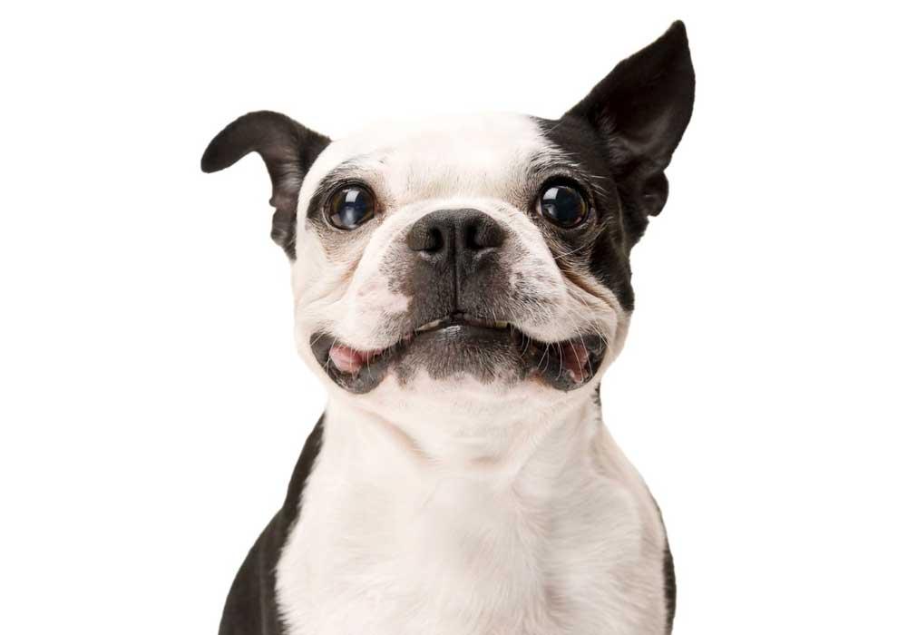 Pet Shop  - hakimizda gorsel 3 - Hakkımızda